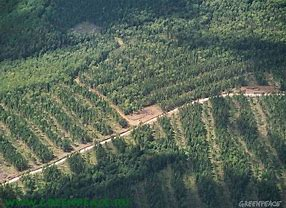 Image result for strip logging