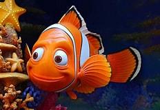 Image result for Famous Fish Nemo. Size: 232 x 160. Source: www.pinterest.com