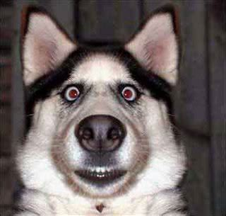 Image result for funny pets images