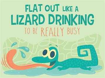 Image result for flat out like a lizard drinking commons photos