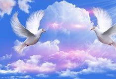 Image result for Animated Dove Flying in the Clouds