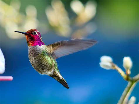 Résultat d'images pour oiseaux exsotique