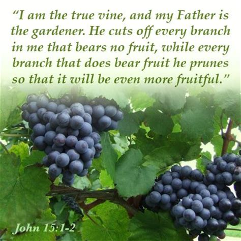 Image result for Jesus my servant the branch