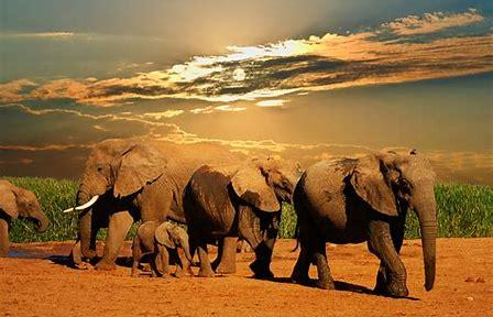 Image result for safari