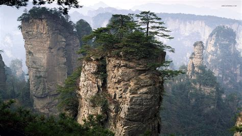 Image result for forest cliff