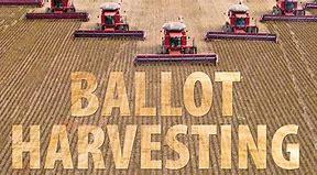 """Image result for """"Ballot harvesting"""""""