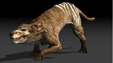 Image result for images of hyaenodon