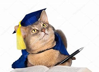Image result for images of cat in cap and gown