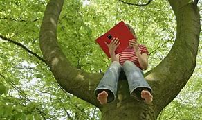 Image result for reading a book in an apple tree