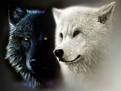 Image result for two wolves inside us