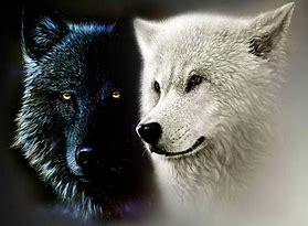 Image result for two wolves inside us