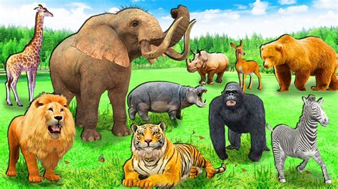Image result for picture of zoo animals