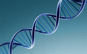 Image result for Genetic Strand