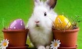 Image result for Easter. Size: 166 x 100. Source: www.freejupiter.com