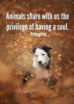 Afbeeldingsresultaten voor i love animals quote
