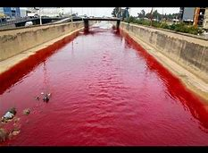 Image result for modern biblical like plagues on the earth