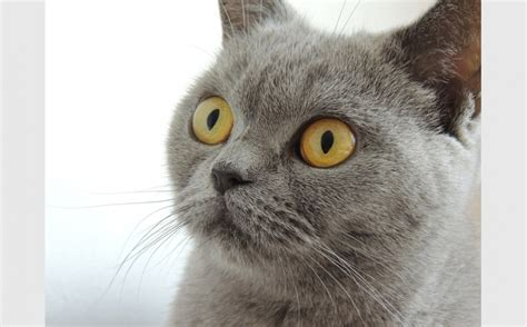 Image result for images of cat