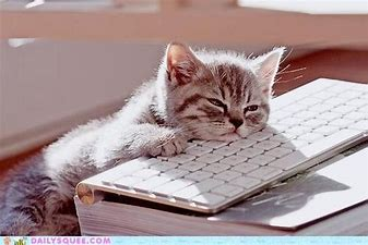 Image result for images of tired cat