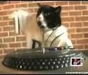 Image result for Imagenes de gatos DJ