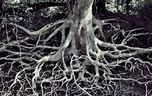 Image result for Free Picture of Tangled Roots. Size: 174 x 110. Source: denisepass.com