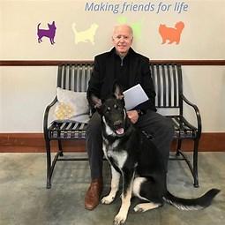 Image result for Images Joe Biden With Shelter Dog