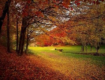 Obraz znaleziony dla: List Od złotej jesieni. Rozmiar: 217 x 165. Źródło: www.se.pl
