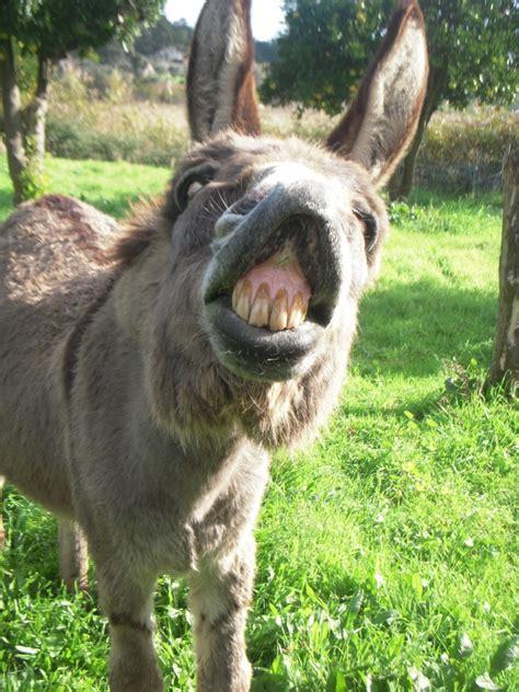 Afbeeldingsresultaten voor ezel