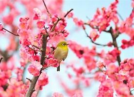 立春 無料画像 に対する画像結果