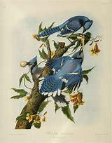 Image result for John James Audubon Birds