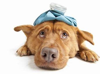 Image result for Sick Dog