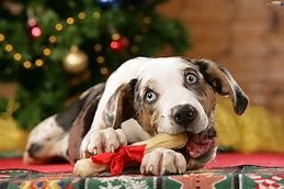 Image result for dog christmas pictures