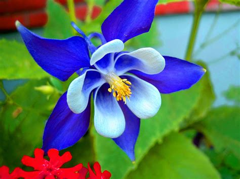 Image result for free images of flowers