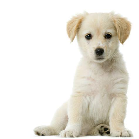 Nalezený obrázek pro pes zvire