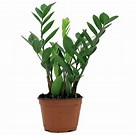 Image result for Plant. Size: 109 x 108. Source: dreamicus.com