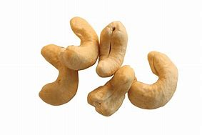 Image result for cashew photos