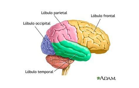 Resultado de imagem para cerebro imagem do neocortex