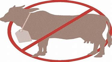 Image result for images of banning cattle and beef products