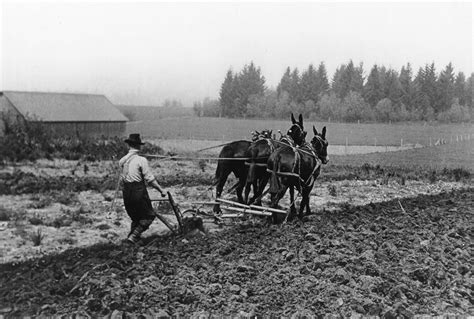 Image result for image 19th century plowing a furrow with mule