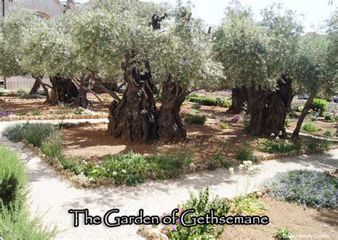 Image result for Garden of Gethsemane olive