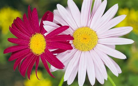 Image result for two flowers