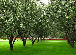Image result for apple orchard