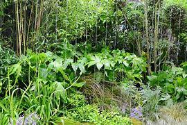 Résultat d'images pour végétation luxuriante PINTEREST