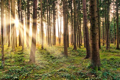 Afbeeldingsresultaten voor bos
