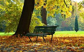 Image result for free picture of a park bench and trees
