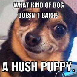 Image result for dog jokes