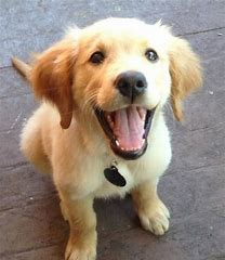 Image result for images of happy puppy