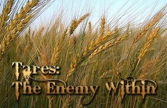 Image result for THe wheat among the tares