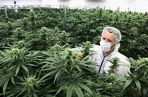 Image result for pics of pot plant