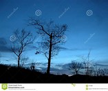 Image result for Royalty Free Picture of Trees At Night