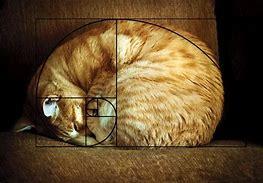 Resultado de imagen de secuencia fibonacci